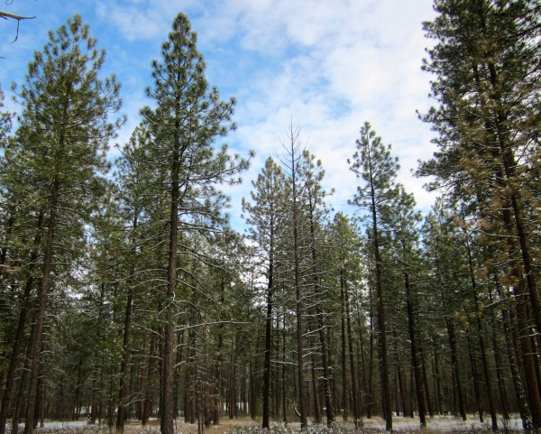 Blue skies and the quiet pines all around.